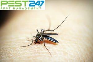 Trồng cây gì muỗi sợ – Các loại cây đuổi muỗi trong nhà