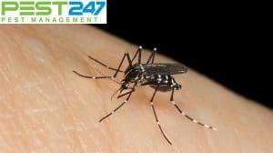 Hướng dẫn cách đuổi muỗi bằng sả hiệu quả nhất