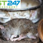 Top 10 thuốc diệt chuột tốt nhất hiện nay