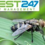 Top 8 thuốc diệt ruồi hiệu quả tốt nhất