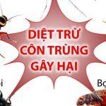 10 cách diệt côn trùng trong phòng ngủ không dùng hóa chất